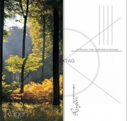 Postkarten DIN lang Hochformat