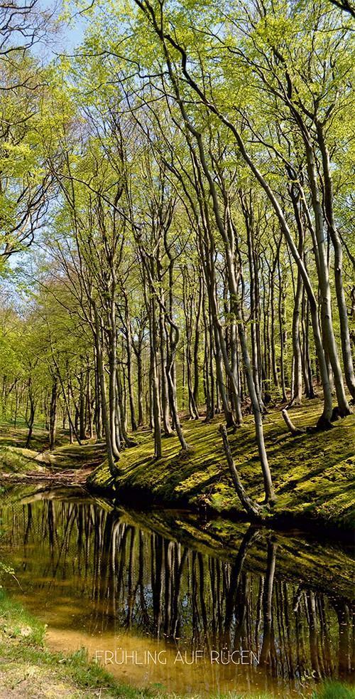 Ansichtskarte Frühling in Lietzow, Großer Jasmunder Bodden auf Rügen (180)