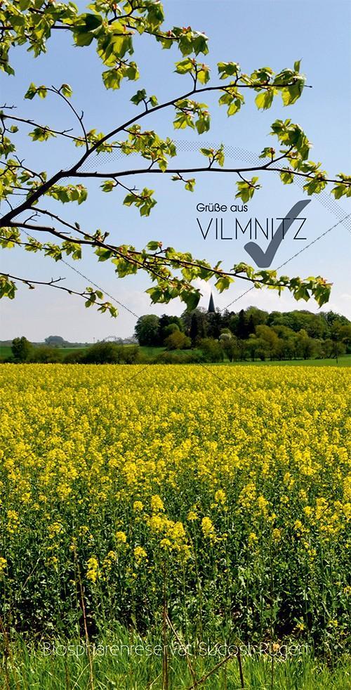 Ansichtskarte Rapsblüte in Vilmnitz, Biosphärenreservat Südost-Rügen (187)