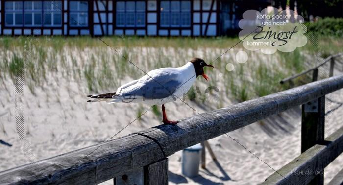 Maxi Card Postkarte - schreiende Möve an der Seebrücke im Ostseebad Zingst - Fischland Darß (152)