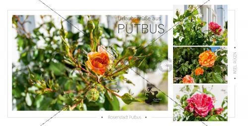 Ansichtskarte - Rosenstadt Putbus (173)