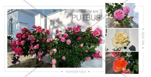 Ansichtskarte - Rosenstadt Putbus (175)